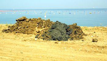 Inquinamento dei mitili del Golfo di Trieste: Greenaction Transnational si rivolge alla Commissione Europea. A rischio la salute dei consumatori europei.